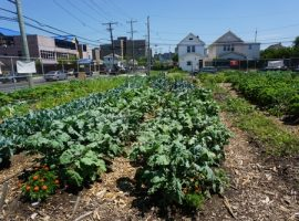 My Visit to a Healing Garden in the Far Rockaways