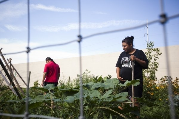 Storytelling Spotlight: Youth Farm and Market Project
