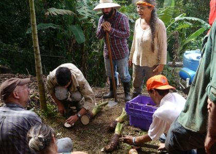 Agroecology in Puerto Rico