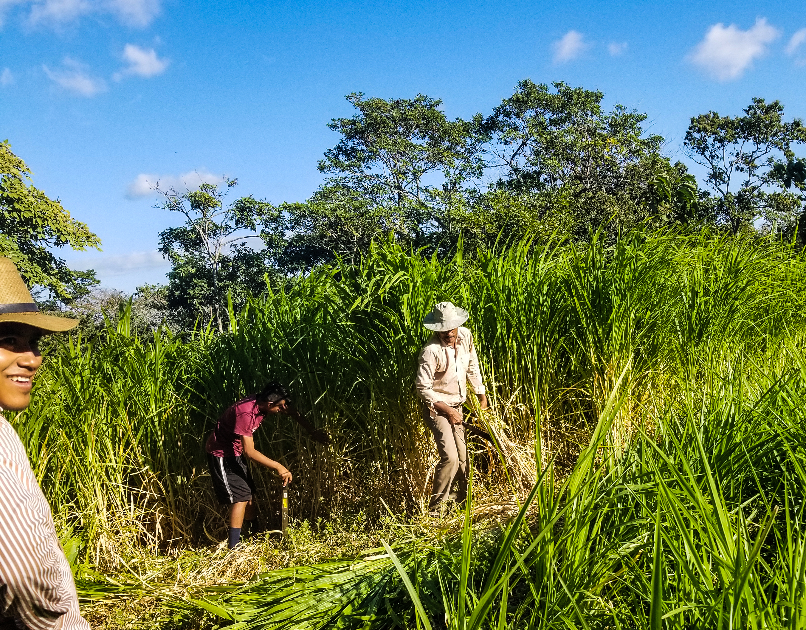 Food Sovereignty And Agrarian Reform in Nicaragua